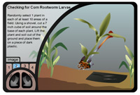 Checking for Corn Rootworm Larvae Instructional flash animation